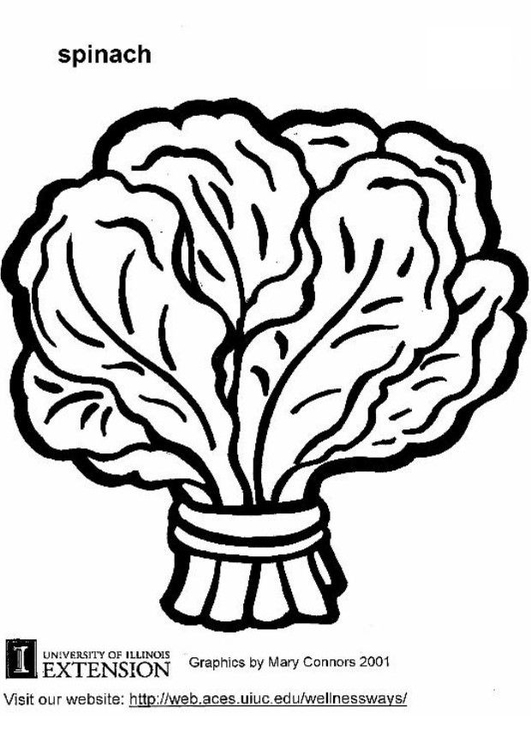 Coloring page spinach