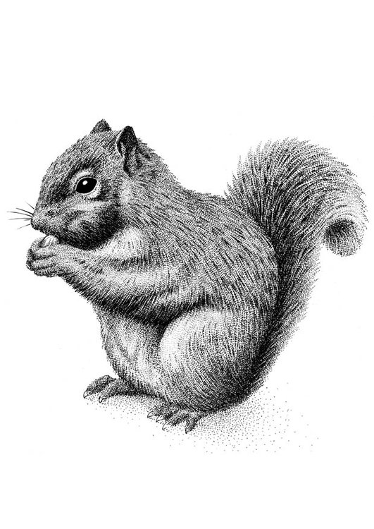 Coloring page squirrel