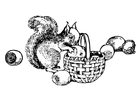 Coloring pages squirrel