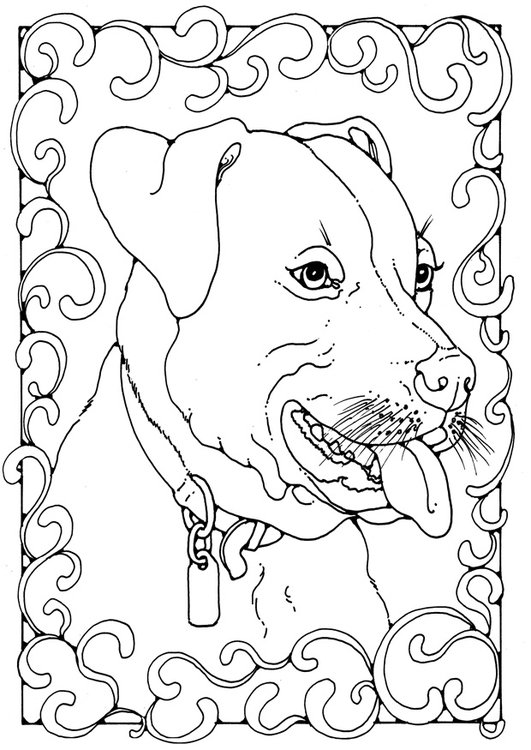 Coloring page staffordshire bull terrier