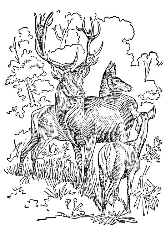 Coloring page Stag and Doe