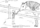 Coloring page stallion Jordan