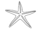 Coloring page starfish