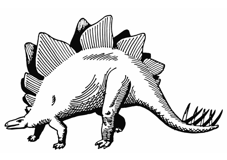 coloring page stegosaurus  free printable coloring pages