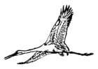 Coloring pages stork