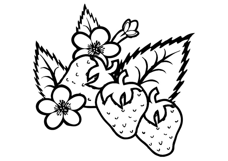 Coloring page strawberries