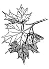 Coloring pages sugar maple