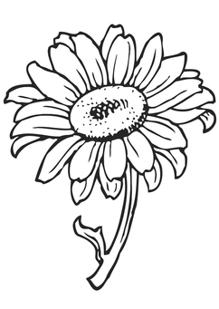 Coloring page sunflower