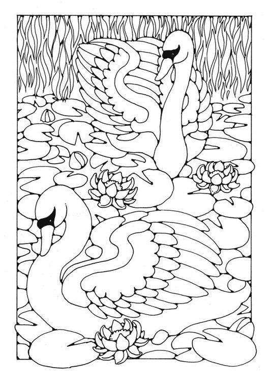 Coloring page swans