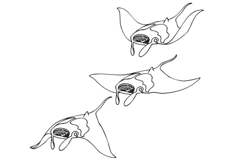 coloring page swimming manta ray