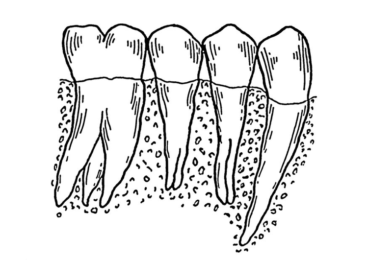 Coloring page teeth