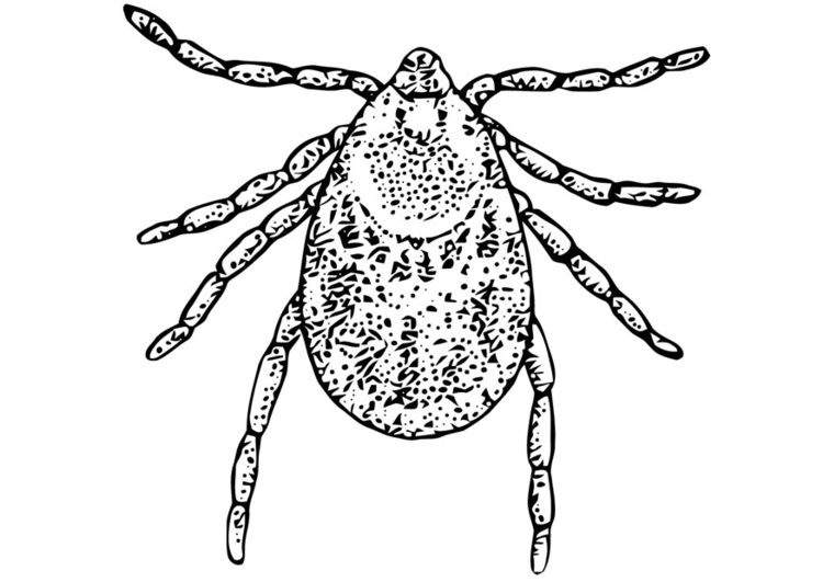 Coloring page tick