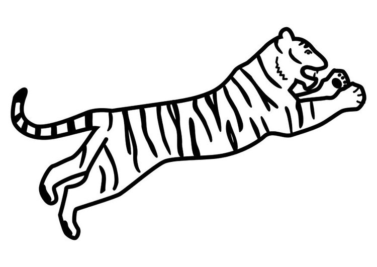Coloring Page Tiger Jumping