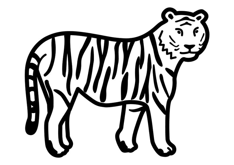 Coloring page tiger standing