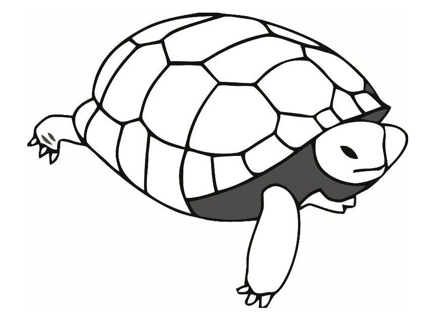 Coloring Pages Pond Animals : Coloring page tortoise img 19638.