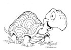 Coloring pages tortoise