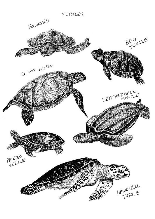 Coloring page tortoises