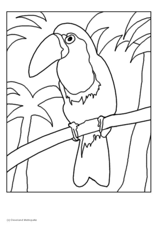 Coloring page toucan