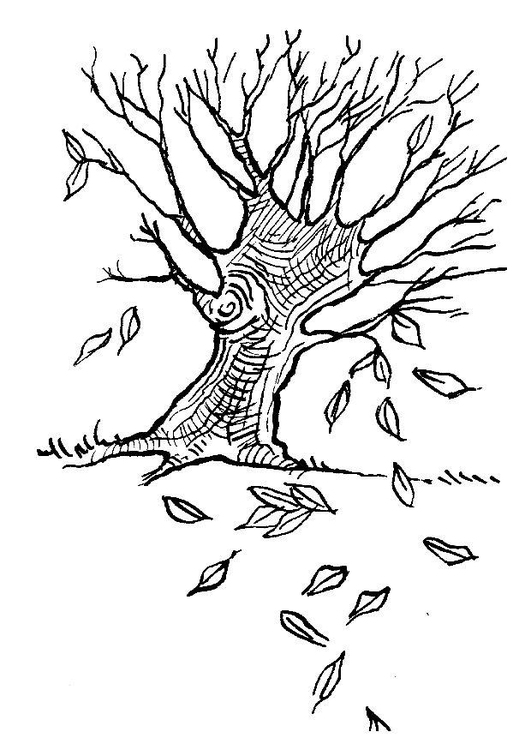 Coloring page tree - autumn leaves