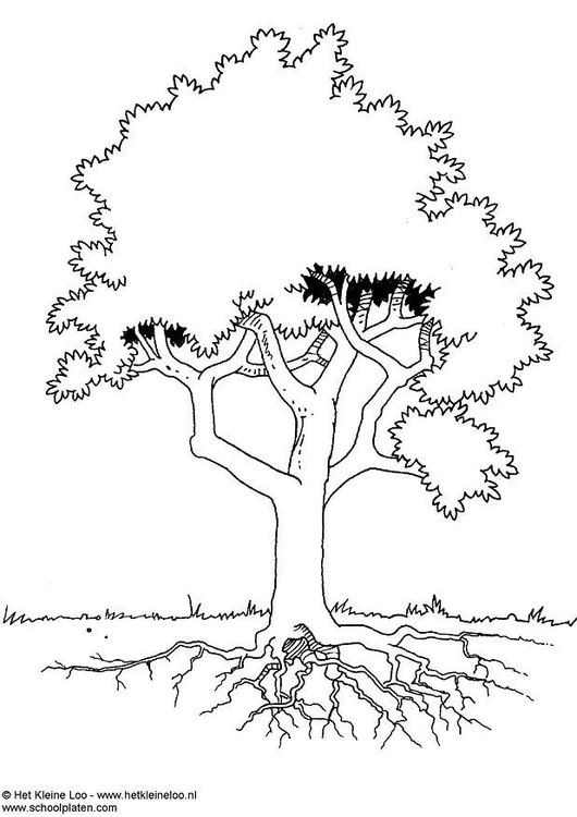 Coloring Page Tree Img 3724 Coloring Page Tree