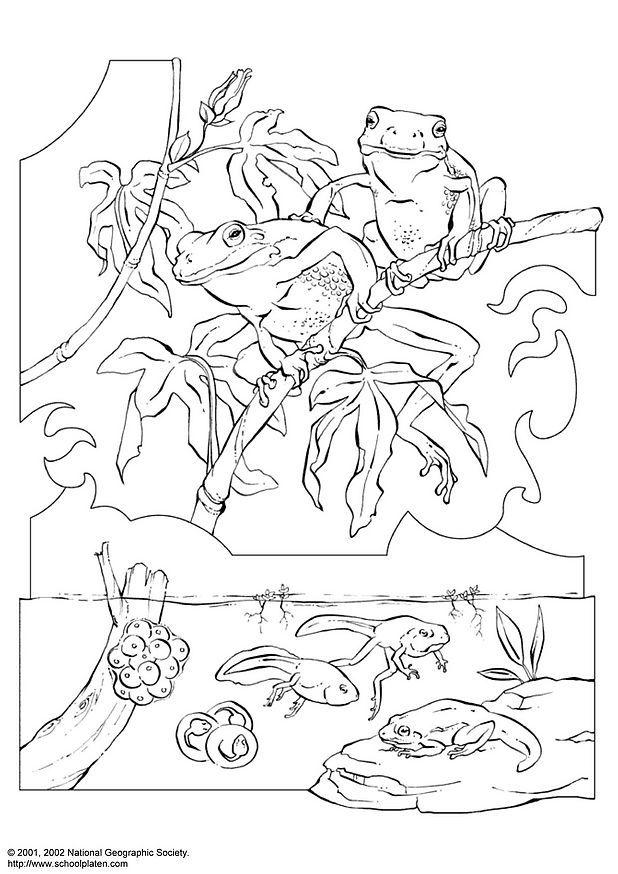 Coloring page tree frog