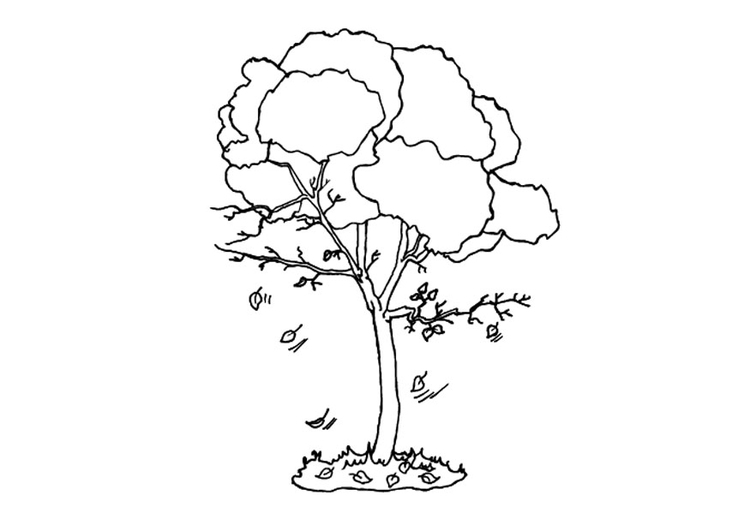 Coloring page tree in autumn