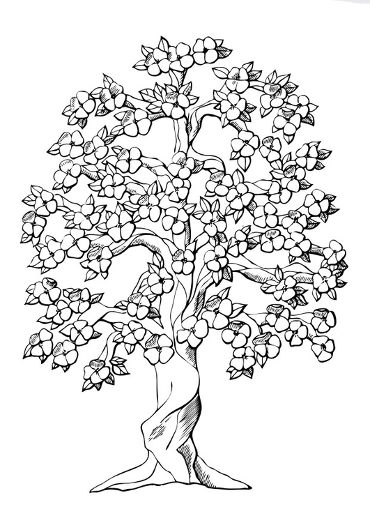 Coloring page tree with blossoms