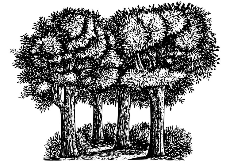 Coloring page Trees