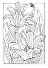 Coloring pages tulips