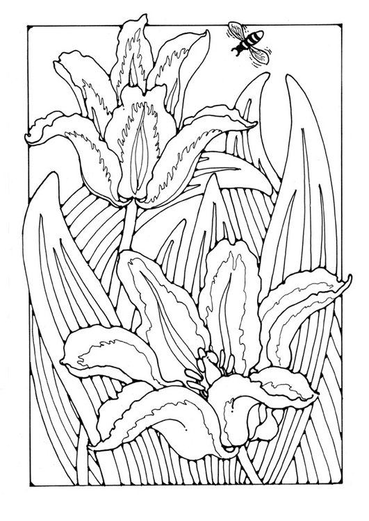 Coloring page tullips