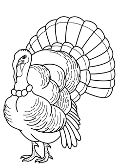 Coloring page Turkey