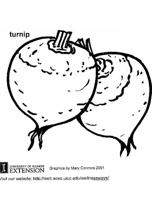Coloring page turnip