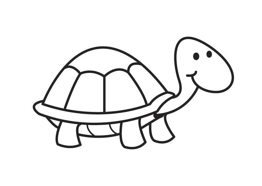 Coloring Pages Pond Animals : Coloring page turtle img 17592.