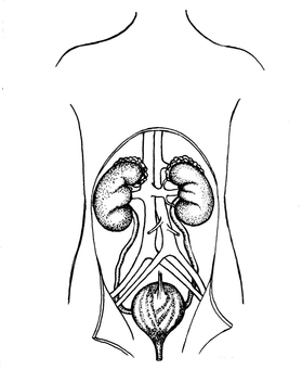 Coloring page urinary system, kydneys and bladder