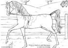 Coloring page Wally dressage