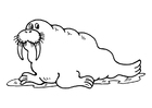 Coloring pages walrus