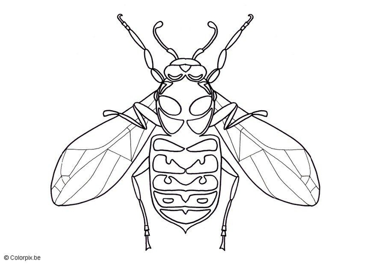 Coloring page wasp