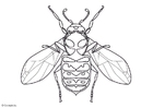 Coloring pages wasp