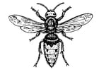 Coloring page wasp - warble fly