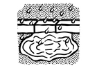 Coloring pages water puddle