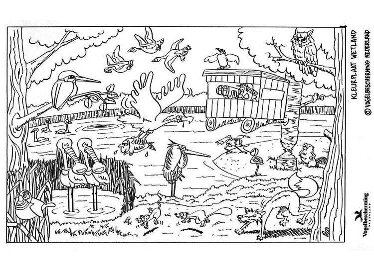 Coloring Page Wetland