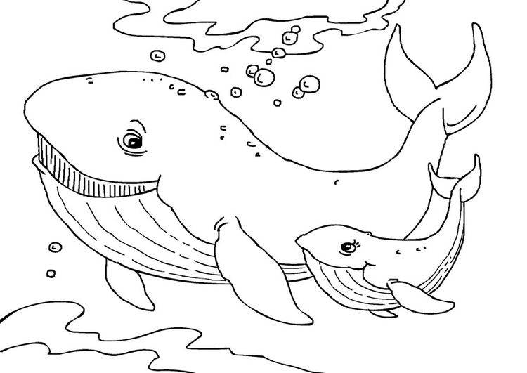 Coloring page whales