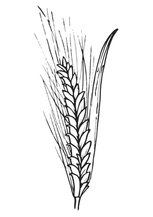Coloring page wheat