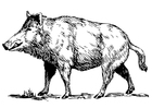 Coloring pages wild boar