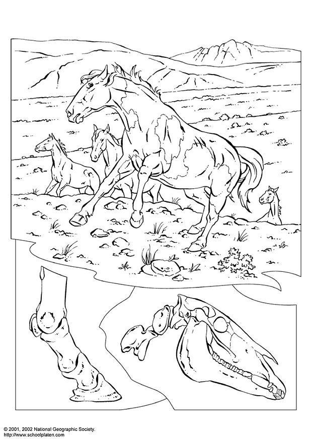 Coloring Page Wild Horses Img 3080