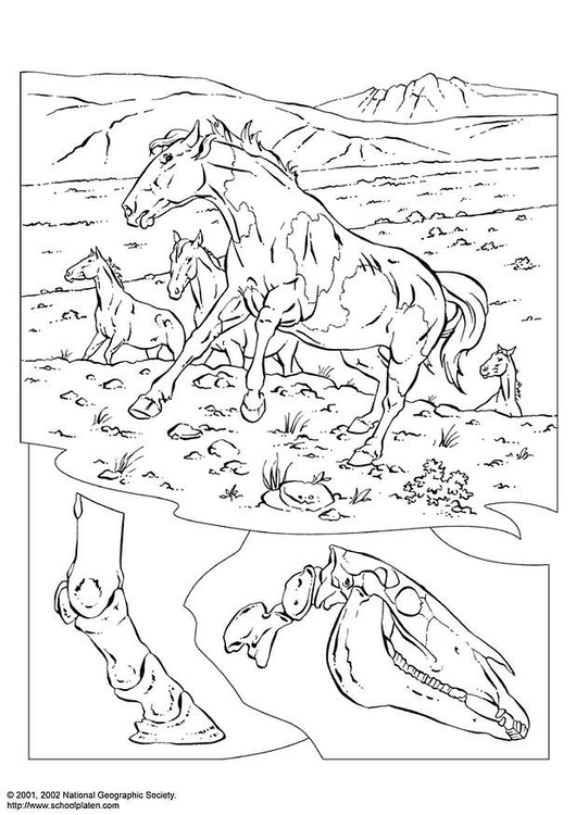 Coloring page wild horses