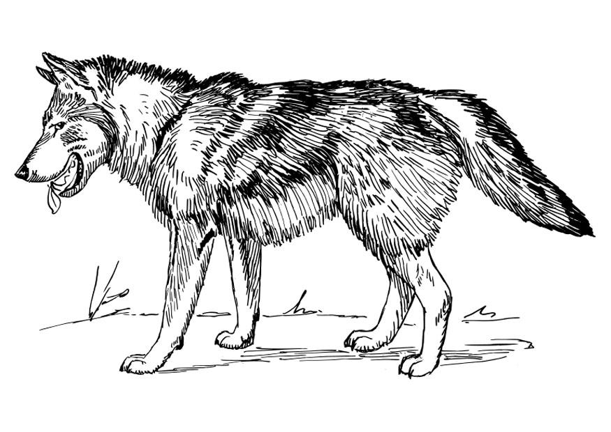 Coloring page wolf - img 22785.
