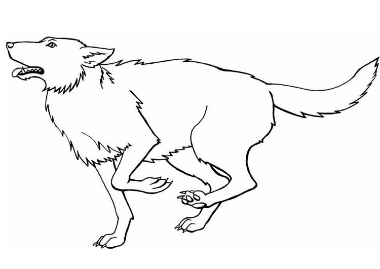 Coloring page wolf