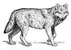 Coloring pages wolf