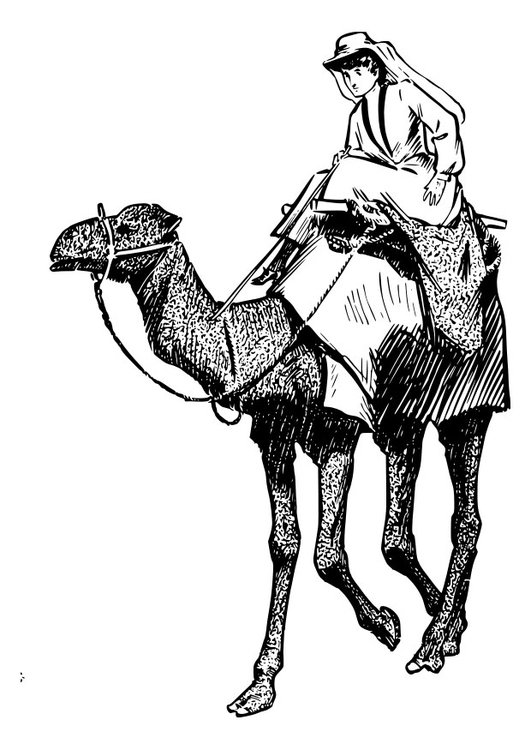 Coloring page woman on camel